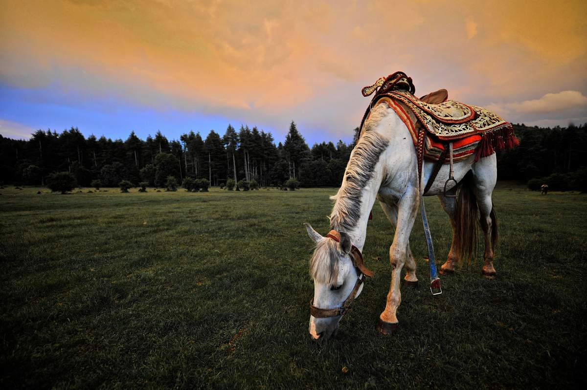 Horse in the heart of the Atlas mountains